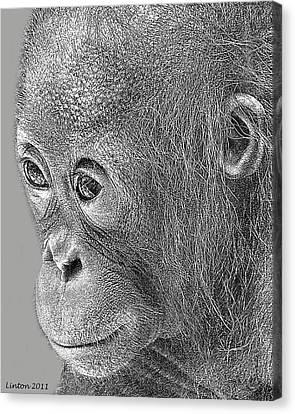 Baby Orangutan Canvas Print by Larry Linton