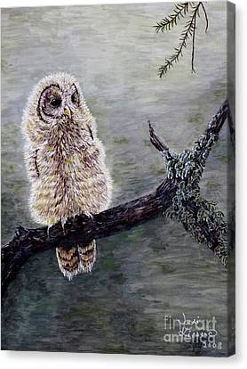 Baby Owl Canvas Print by Judy Kirouac