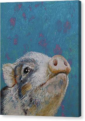 Baby Pig Canvas Print by Michael Creese