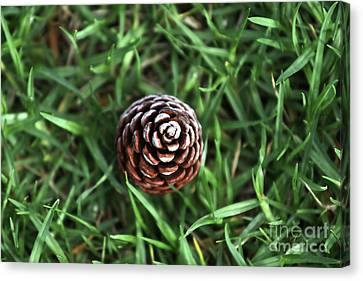 Canvas Print featuring the photograph Baby Pine Cone by Stephen Mitchell