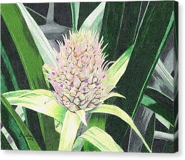 Baby Pineapple Canvas Print