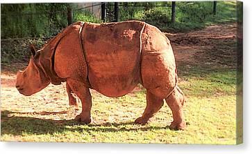 Baby Rhino Canvas Print