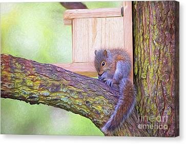 Baby Squirrel In The Tree Canvas Print
