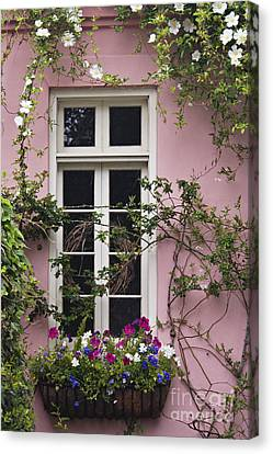Back Alley Window Box - D001793 Canvas Print by Daniel Dempster