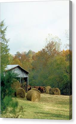 Back At The Barn Canvas Print by Jan Amiss Photography