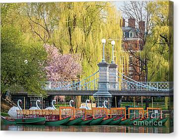 Back Bay Swans Canvas Print by Susan Cole Kelly