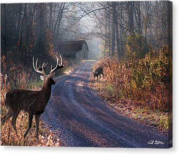 Back Home Canvas Print by Bill Stephens
