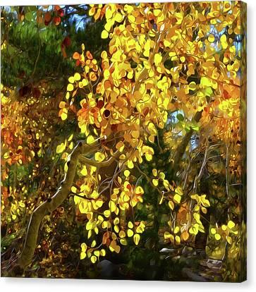 Back Lit Aspen Tree A Stylized Landscape By Frank Lee Hawkins Canvas Print