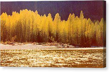 Back Lit Trees By The River Ae 2  Canvas Print by Lyle Crump
