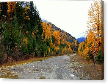Canvas Print featuring the photograph Back Road Color by Lynn Bawden