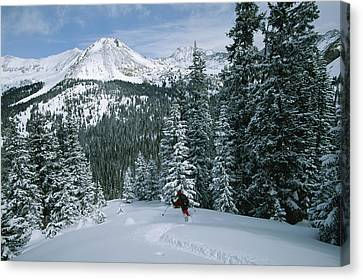 Backcountry Skiing Into An Evergreen Canvas Print by Tim Laman