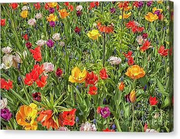 Background Of Colorful Flowers Canvas Print by Patricia Hofmeester