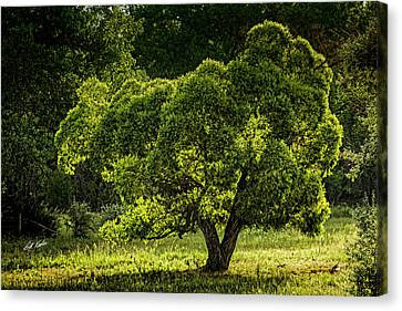 Backlit And Green Canvas Print