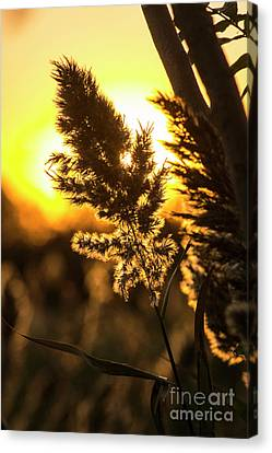 Canvas Print featuring the photograph Backlit By The Sunset by Zawhaus Photography