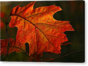 Canvas Print featuring the photograph Backlit Leaf by Shari Jardina