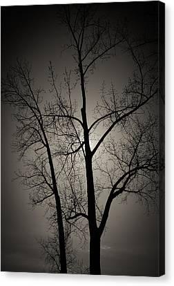 Backlit Trees Canvas Print
