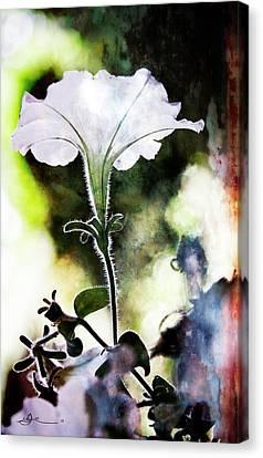 Backlit White Flower Canvas Print