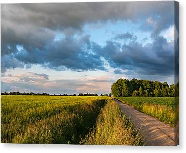 Canvas Print featuring the photograph Backroad Between The Fields by Dmytro Korol