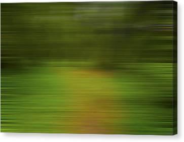 Backwoods Path X Canvas Print