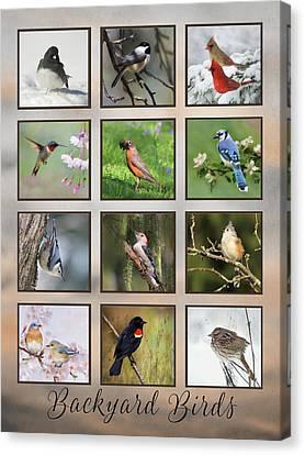 Backyard Birds Canvas Print