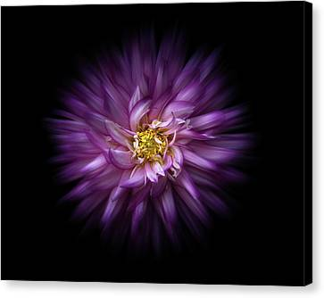 Canvas Print featuring the photograph Backyard Flowers 20 Color Flow Version by Brian Carson