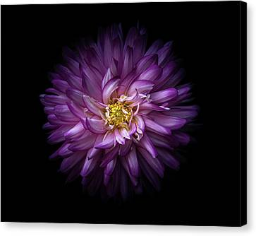 Canvas Print featuring the photograph Backyard Flowers 20 Color Version by Brian Carson