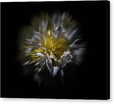 Canvas Print featuring the photograph Backyard Flowers 25 Color Flow Version by Brian Carson