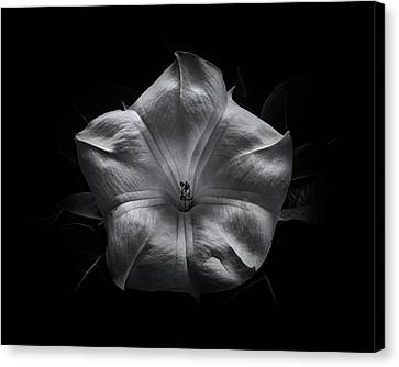 Canvas Print featuring the photograph Backyard Flowers In Black And White 24 by Brian Carson