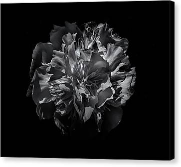 Backyard Flowers In Black And White 25 Canvas Print by Brian Carson