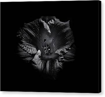 Canvas Print featuring the photograph Backyard Flowers In Black And White 26 by Brian Carson