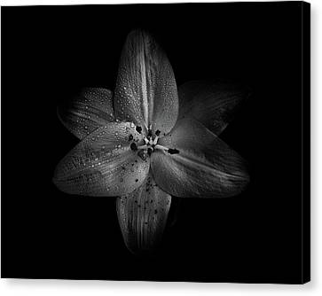 Backyard Flowers In Black And White 28 Canvas Print by Brian Carson