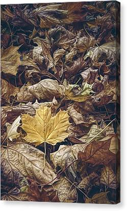 Backyard Leaves Canvas Print by Scott Norris