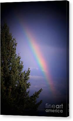 Backyard Rainbow Canvas Print by Marjorie Imbeau