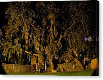 Backyard Tree Canvas Print by Kendall Tabor