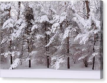 Canvas Print featuring the photograph Backyard Trees by Don Nieman