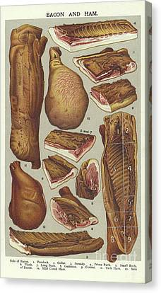 Bacon And Ham  Canvas Print by English School