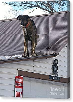 Bad Dog Canvas Print by Jack Norton