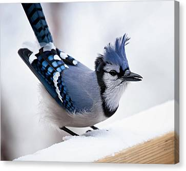 White Birds Canvas Print - Bad Feather Day by Al  Mueller