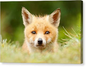 Bad Fur Day - Fox Cub Canvas Print by Roeselien Raimond