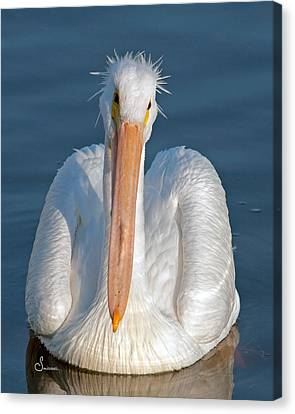 Bad Hair Day Canvas Print by Sally Mitchell