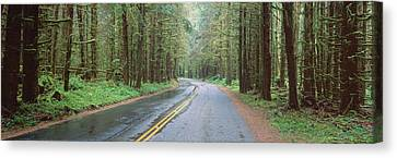 Bad Weather Road, Hoh Rain Forest Canvas Print by Panoramic Images