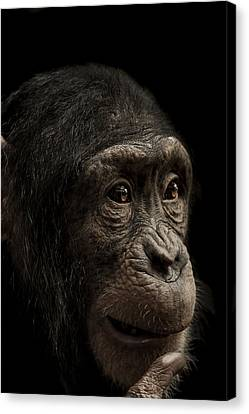 Baffled Canvas Print by Paul Neville