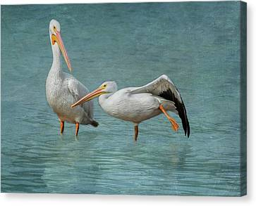 Flying White Pelicans Canvas Print - Balance by Kim Hojnacki
