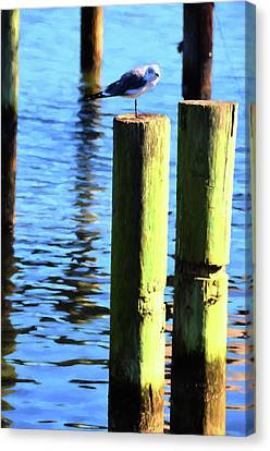Canvas Print featuring the photograph Balanced by Jan Amiss Photography