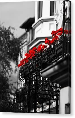 Balcony Roses Canvas Print