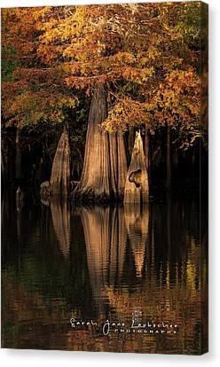 Bald Cypress Reflections Canvas Print