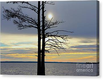 Bald Cypress Silhouette Canvas Print