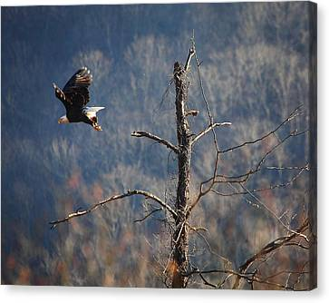 Bald Eagle At Boxley Mill Pond Canvas Print by Michael Dougherty