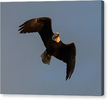 Bald Eagle At Sunrise Canvas Print