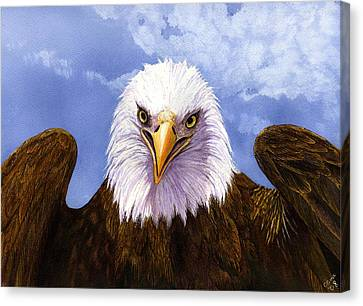 Bald Eagle Canvas Print by Catherine G McElroy